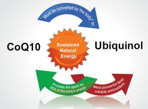 CoQ10 Vs Ubiquinol For Fertility over 40