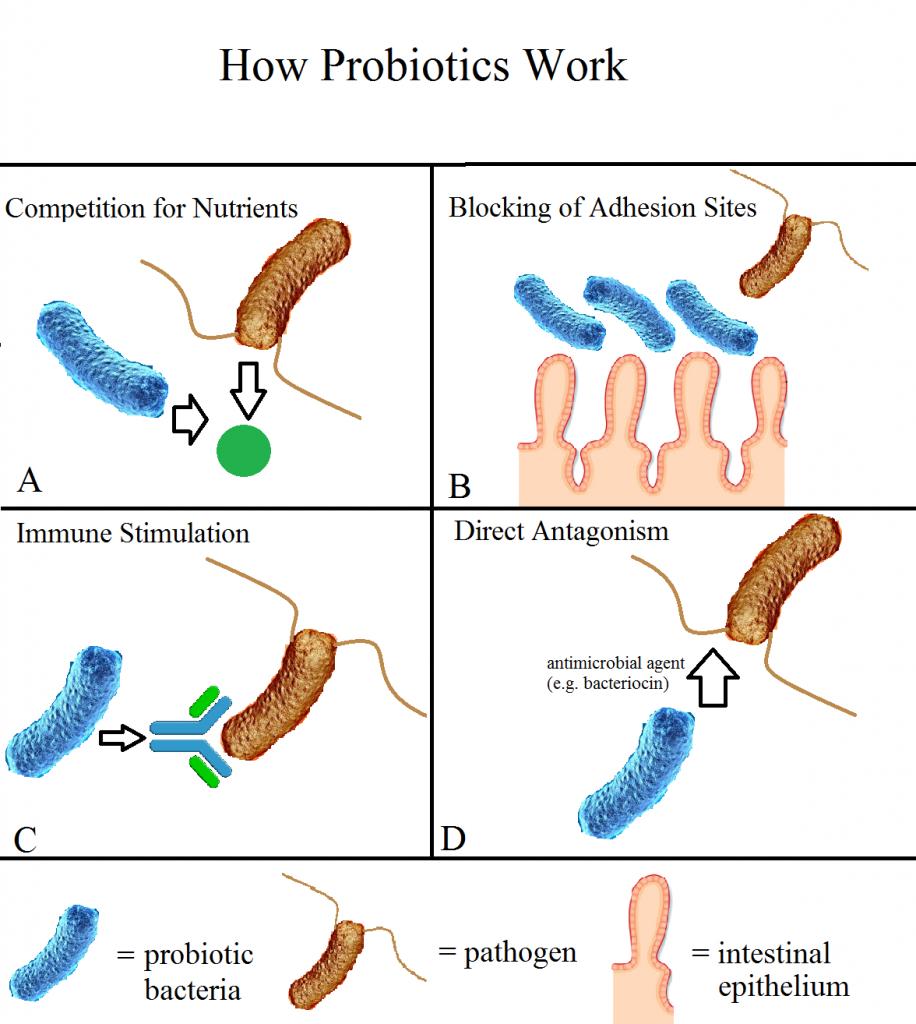 Probiotics How They Work